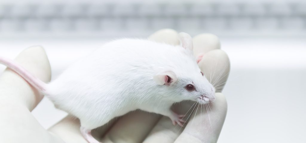 Implanting Genetically Corrected Stem Cells Partially Restores Enzyme Activity in Sanfilippo Mice, Study Finds